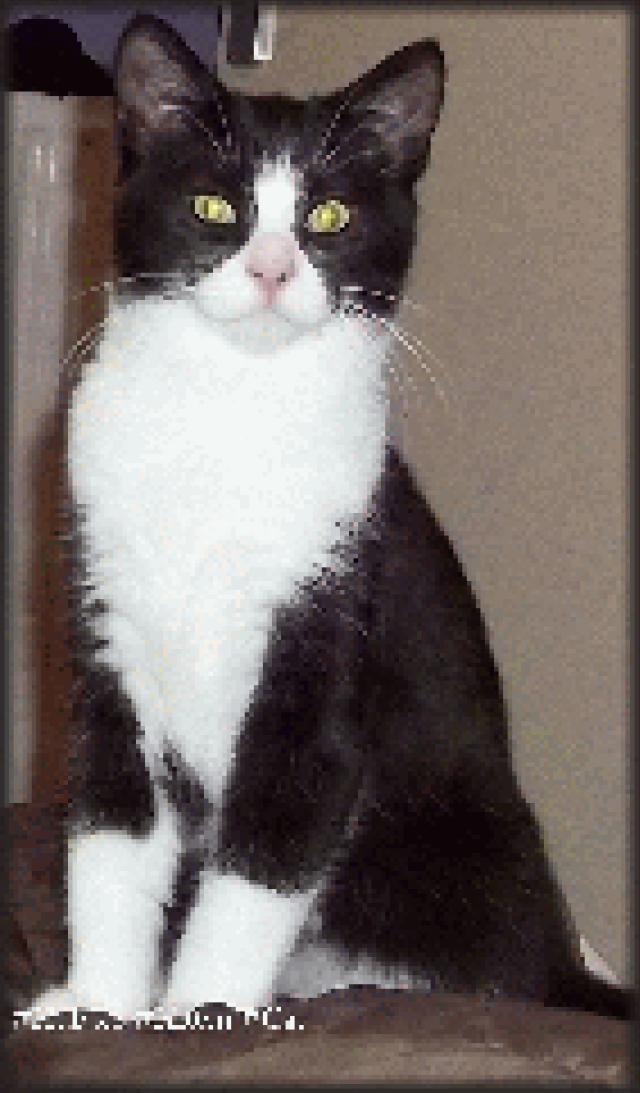 hubble-kitten-cat-6mnthsold