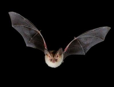 Big Up BatsUK