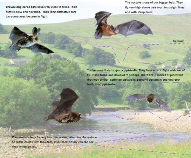 Bats-in-UK