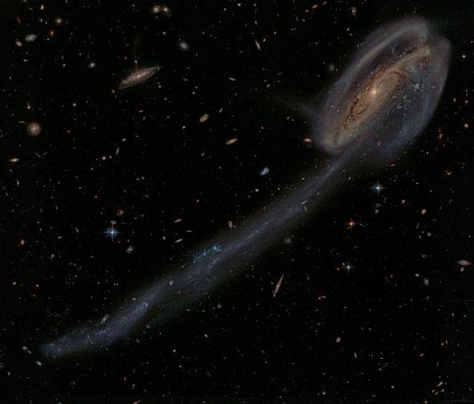 HST image of Tadpole Galaxy
